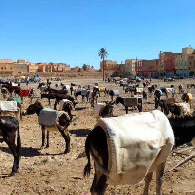 Moroccan Escapade 7 Quarzazate
