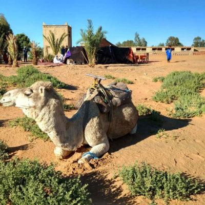 Moroccan Escapade Morocco Camel